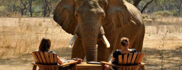 Luxury African Safari Tour Operators   Myvacationplan org